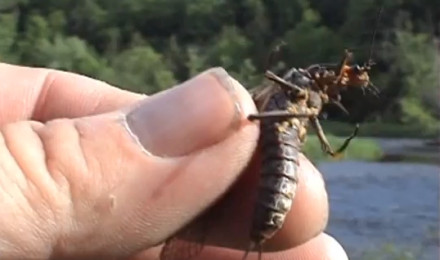 Fly Hatches In The Adirondacks