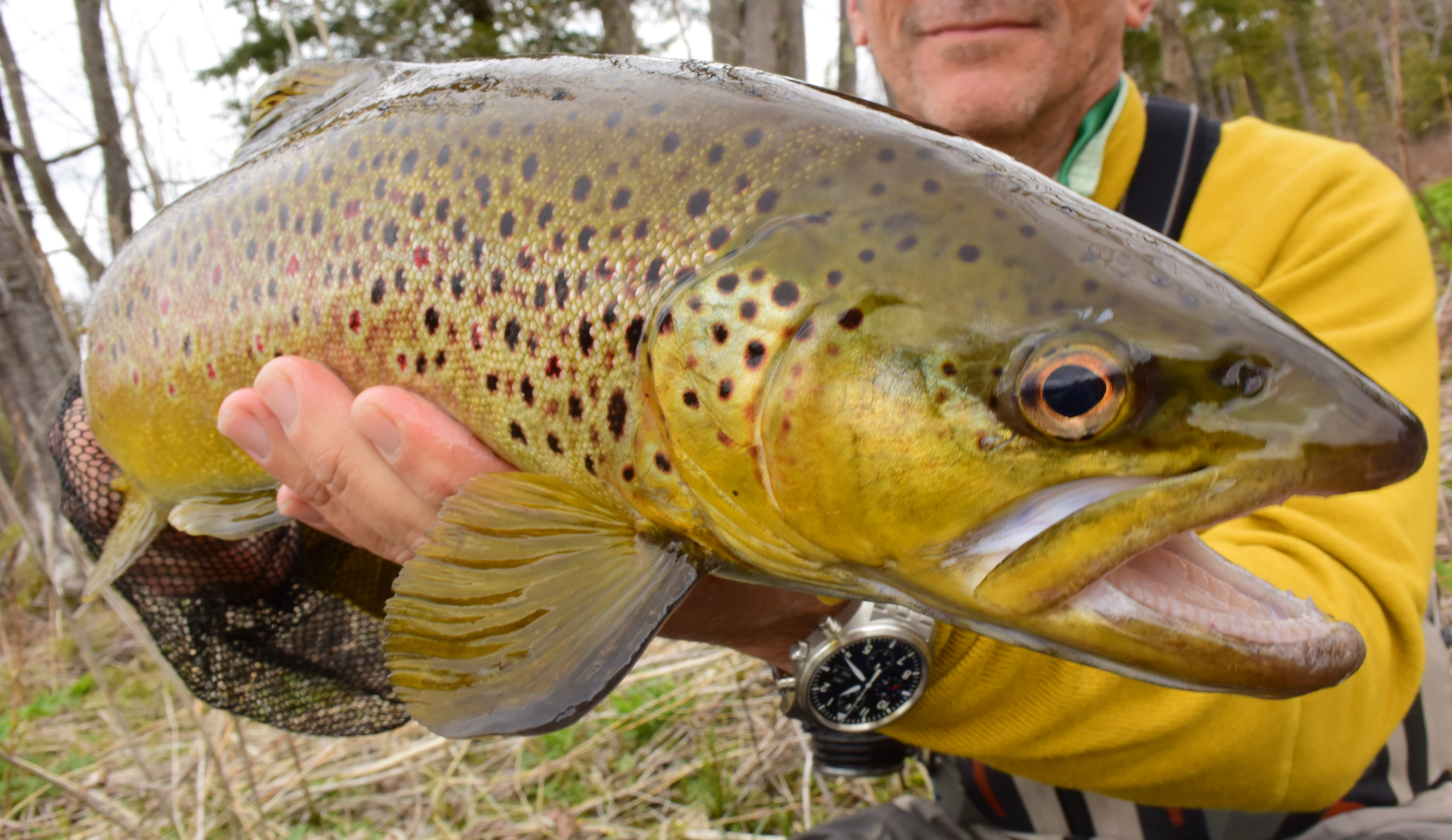 More june trout with fly fish the adirondacks 39 rich for Adirondack fly fishing