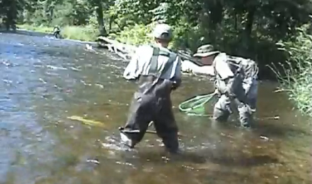 Wild Trout Fishing, July 2009